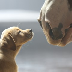Heart Warming Budweiser Super Bowl Commercial