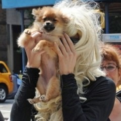 Amanda Bynes Soaked Her Dog In Gasoline